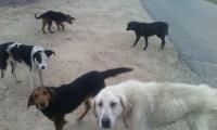 Кучета нахапаха 26-годишна в Шуменско